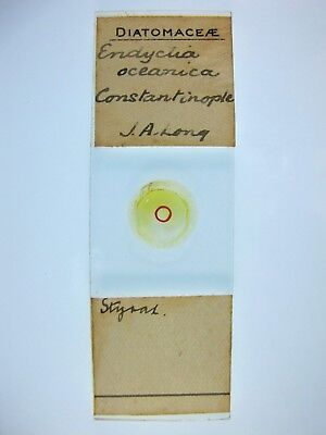 Antique Microscope Slide by J.A.Long. Diatoms. Endyctia oceanica. Constantinople