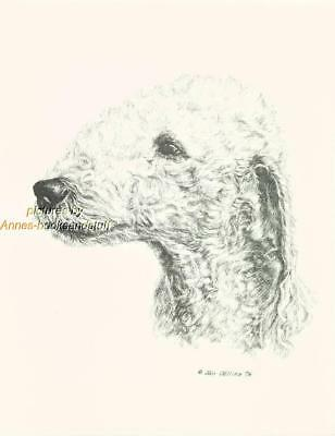 #137 BEDLINGTON TERRIER art print * Pen & ink drawing done by Jan Jellins