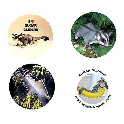 Sugar Glider Magnets: 4 Sweet Sugars for your Fridge or Collection-A Great Gift