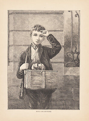 Boy With His Beloved Pet Guinea Pigs Small Pets Animals Antique Print 1886