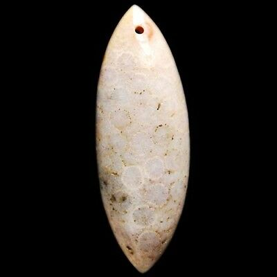 Y95265 51x18x9 Coral Fossil Olivary Pendant Bead