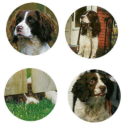 English Springer Spaniel Magnets:4 Cool Springers 4 your Collection-A Great Gift