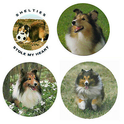 Shetland Sheepdog Magnets : 4 Cool Shelties for your  Collection-A Great Gift