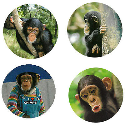Chimpanzee Magnets: 4 Cool Chimps for your Fridge or Collection-A Great Gift
