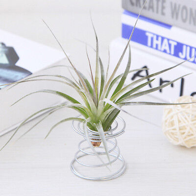 Metal Air Plant Stand Holder Air Plant Container Tabletop Decor Supplies