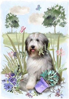 "Bearded Collie Dog A6 (4"" x 6"") Blank Card / Notelet Design By Starprint"