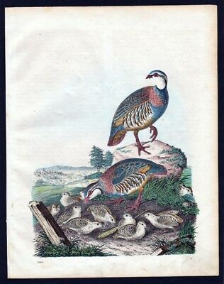 1860 - Rothuhn Hühner Huhn hen Lithographie lithograph