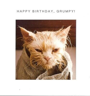 Cute Funny Birthday Card With Grumpy Cat For Male Or Female Animal Blank