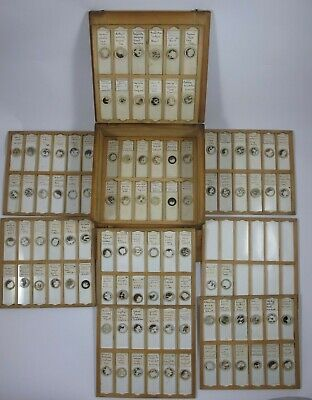 Cased collection of 98 Vintage Microscope Slides. Seeds. Dated 1947.
