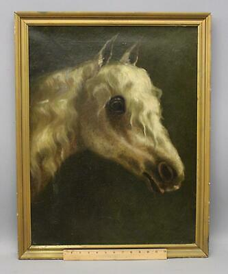 19thC Antique Appaloosa White Horse Portrait Equestrian O/C Oil Painting, NR