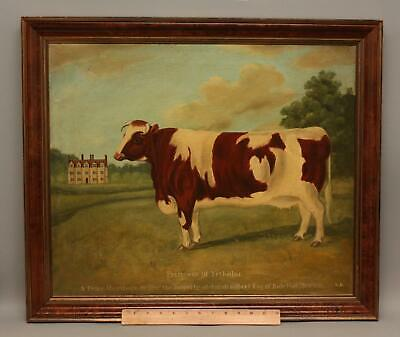 19thC Antique English Folk Art Prize Heifer Cow Oil Painting Princess of Yetholm