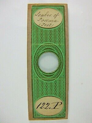 Antique Microscope Slide by C.M.Topping. Scales of Podura. (Test).