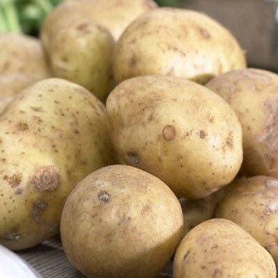 10 Home Guard Seed Potatoes First Early