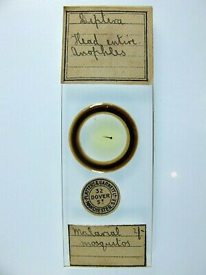 Antique Microscope Slide by Flatters & Garnett. Malarial Mosquitos. Anopheles.