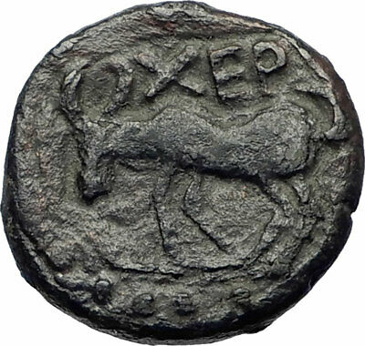Chersonesos in Tauric Chersonesos Authentic Ancient 300BC Greek Coin i73516