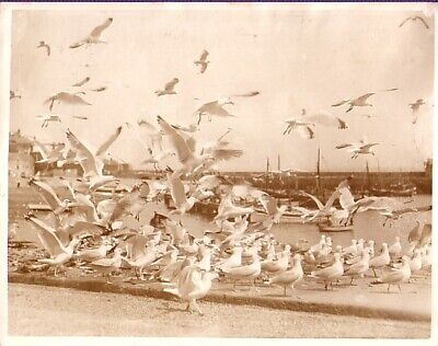Cornwall St Ives Fishing Harbor Sea Gull port de pêche goelands old Photo 1930