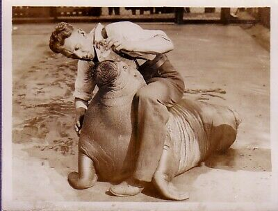 London Zoo Life Pet Walrus & Keeper scene Heat wave morse canicule Photo 1932