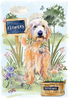 """Labradoodle Dog (4"""" x 6"""") Blank Card/ Notelet Design By Starprint"""