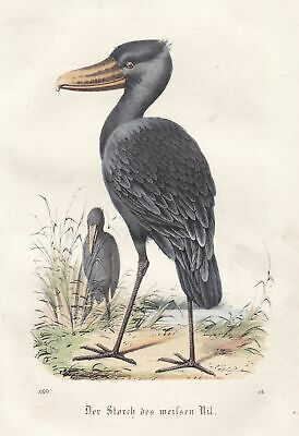 1861 Storch stork Nil Nile Afrika Africa Strom stream Lithographie lithograph
