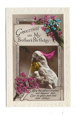 Vintage RP postcard 'Greetings on my Brothers Birthday' Parrot! pmk Bristol 1929