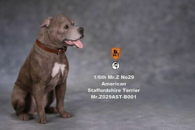 Mr.Z 1//6 MRZ029 A003 American Staffordshire Terrier Dog Animal Pet Figure MOdel