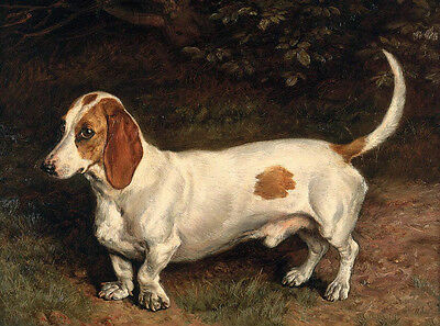 Hand painted Oil painting fat animals dogs Dachshund in landscape handpainted
