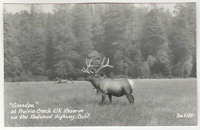 PRAIRIE CREEK ELK RESERVE California RP RPPC Real Photo Postcard ZAN STARK CA