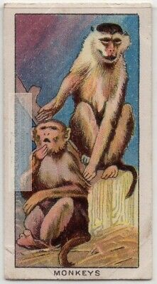 Your Pet Monkey Care Housing Feeding Primate 1920s Ad Trade Card