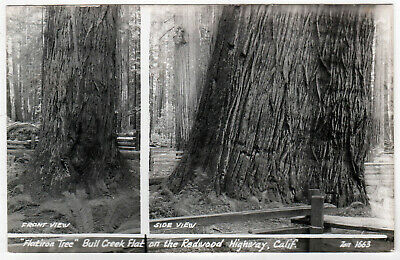 BULL CREEK FLAT California RPPC RP Real Photo Postcard REDWOOD HIGHWAY Cali CA