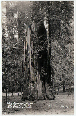 BIG BASIN Redwoods CALIFORNIA RPPC RP Real Photo Postcard SANTA CRUZ Ruined Tree