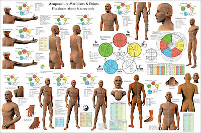 Acupuncture Meridian Pathways and Points Poster 24 X 36 Wall Chart