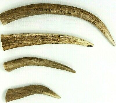 Whole Real ELK ANTLER Organic Dog Bone Chew Small Medium Large XL Treat Toy Deer
