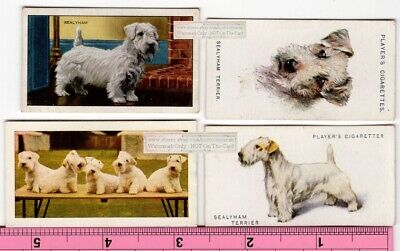 Sealyham Terrier Dogs 4 Different Vintage Ad Trade Cards 2nd