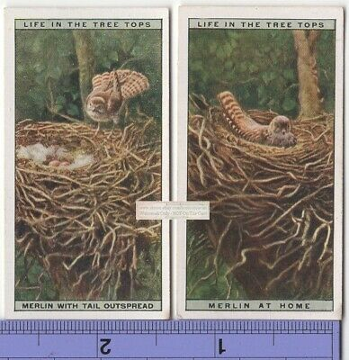 Pigeon Hawk Merlin Falcon Bird and Family Nest TWO 90+ Y/O Ad Trade Cards 3
