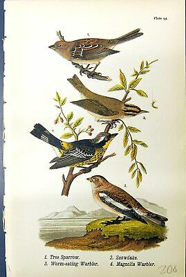 Old Print Tree Sparrow Snowflake Worm-Eating Warbler Mangolia Birds 1890 19th