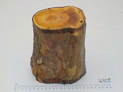 English Yew wood turning or carving log blank.  100 x 150 x 175mm.  2916