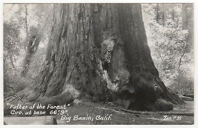 BIG BASIN REDWOODS STATE PARK California RPPC Real Photo Postcard ZAN STARK