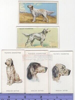 English Setter Dog 5 Different Vintage Ad Trade Cards #3 Canine Pet
