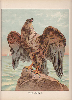 Eagle Perched On Ocean Rock Ship In Distance Eagle Bird Litho Antique Print 1892