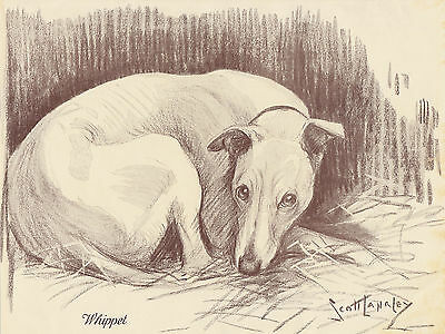 WHIPPETS WHIPPET DOG VINTAGE DOG PRINT 1935 by NINA SCOTT LANGLEY