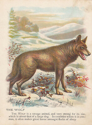 Wolves Wolf Traveling Through Snow Animals Antique Lithograph Art Print 1899