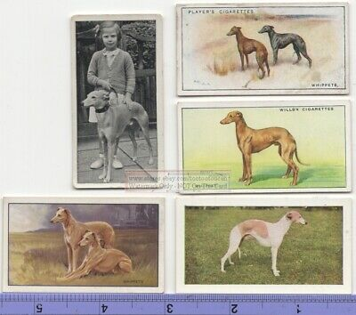 Whippet Dog 5  Different Vintage Ad Trade Cards #3 Canine Pet