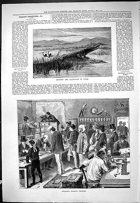 Old 1877 Alligator Hunting India Training Homing Pigeons Birds Gun Cl Victorian