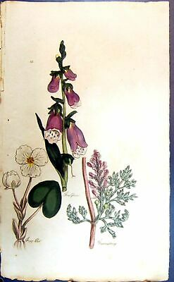 Original Old Antique Print Fox Glove Flowers Colour Botany Plants