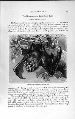Original Old Antique Print Natural History 1893-94 Horseshoe Bat Leaf-Nosed