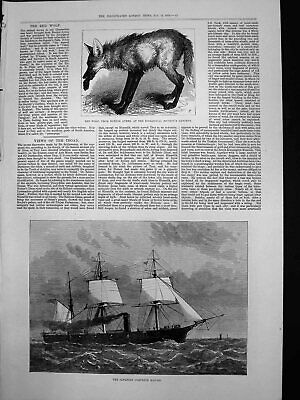 Old Antique Print Japanese Corvette Kau Go Red Wolf Buenos Ayres Zoo 1878 19th