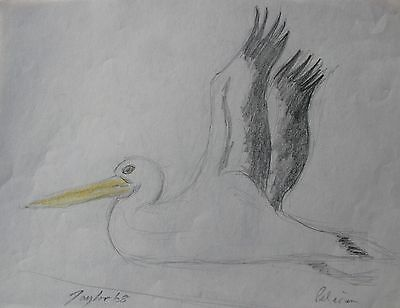 "John Taylor Australian Pencil ""study Of Pelican Bird"" 1968"