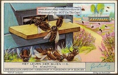 The Honey Bee Protecting Its Hive 1920s Trade Ad  Card