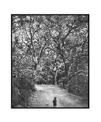 Bullock Wynn Child On Forest Road Matted