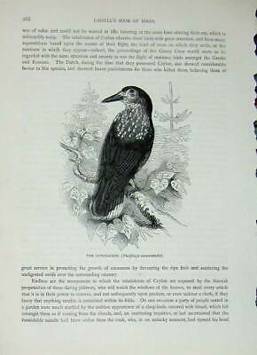 Original Old Antique Print Cassell'S Birds C1870 Nutcracker Caryocatactes Raven